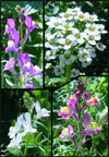 4 examples of the Wildflower Blend of flowers Click to enlarge