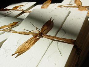 seed paper bifolds of #9s paper with hemlock eco-twist